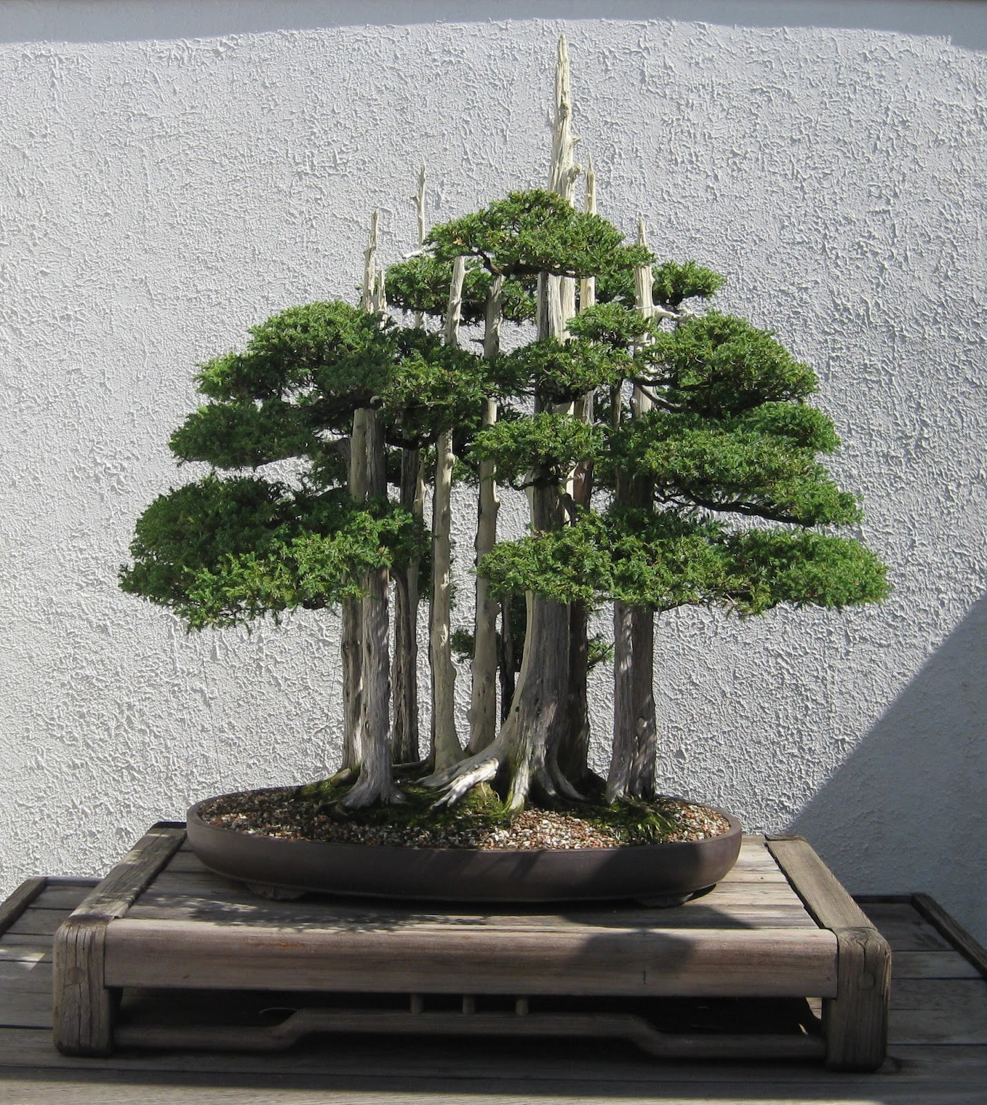 Akron Canton Bonsai Society February 2012