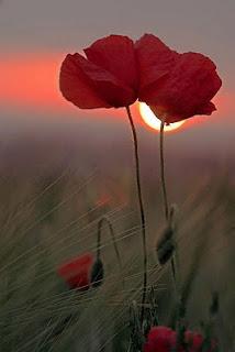 Amor Amapola pareja sexo sensual cama erótico desnuda rojo bella poesia poesía poema romántico romantic