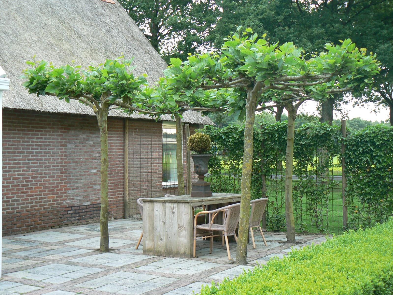 træer på terrassen
