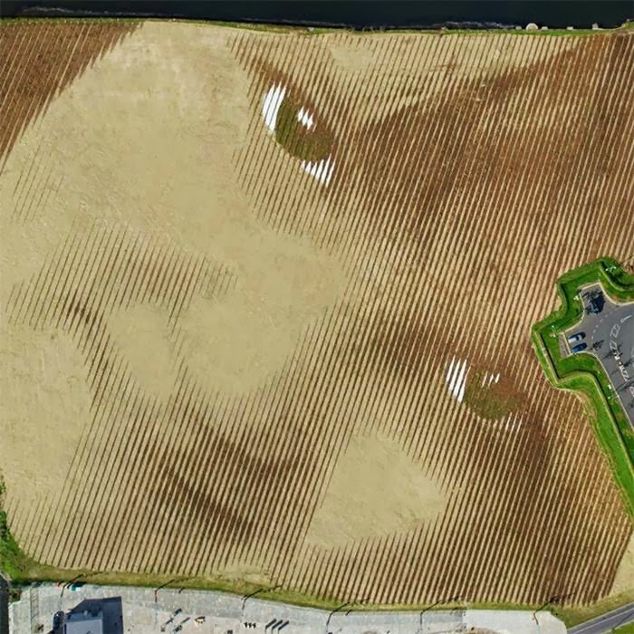 Massive Land Art Portrait Goes Up in Ireland