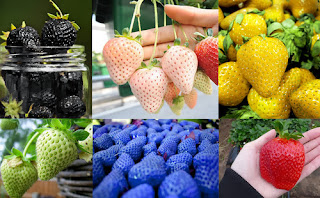 50pcs / 6 Types of Strawberry Seeds Black White Yellow Blue Giant Strawberries