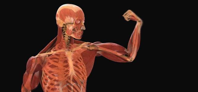Cuerpo humano y fisiologia