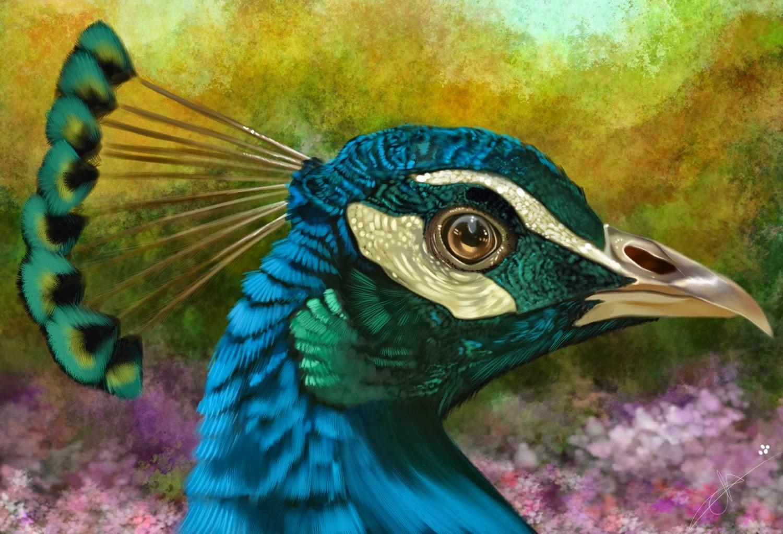 Cu l es el origen del pavo real por qu tiene hermosas - Fotos de un pavo real ...