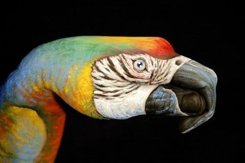 14-Parrot-Guido-Daniele-Artist-Hand-Painting-Italian