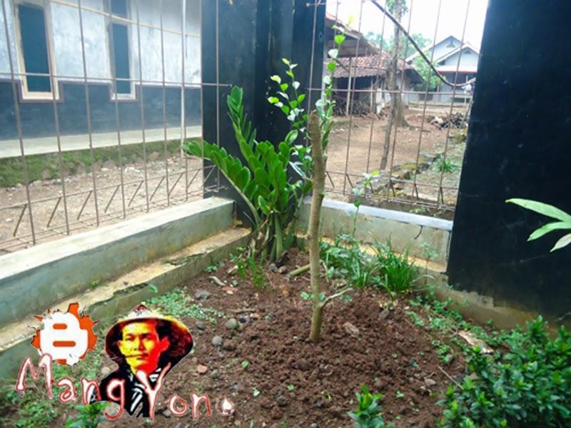 Cara membindahkan tanaman dari pot ke tanah