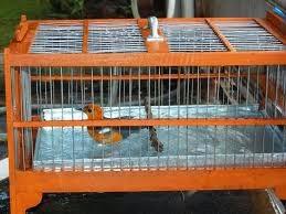http://disiniweb.blogspot.com/2014/10/sangkar-untuk-memandikan-burung.html