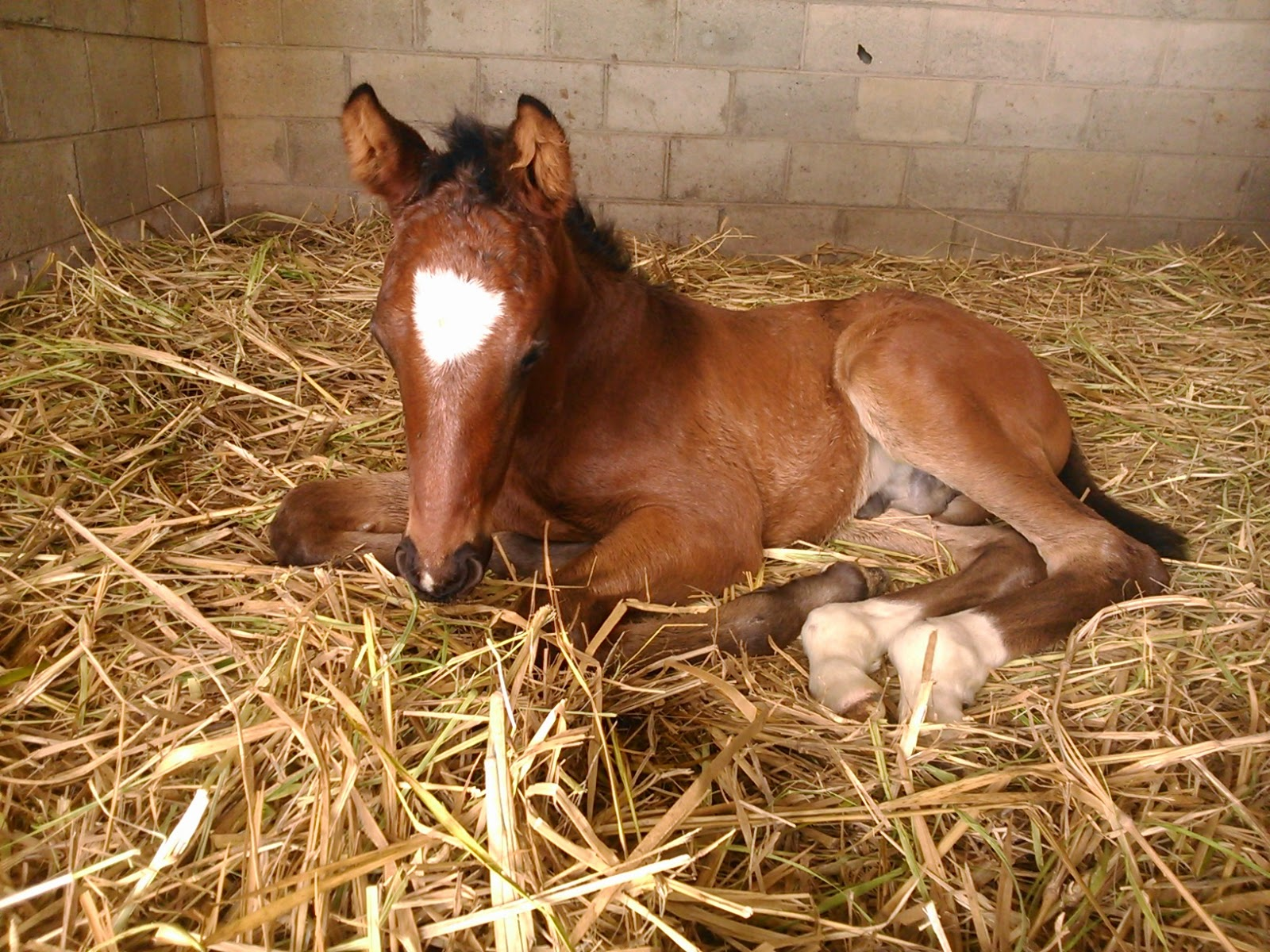Y Horse Is Amazing Manejo Reproductivo Eq...