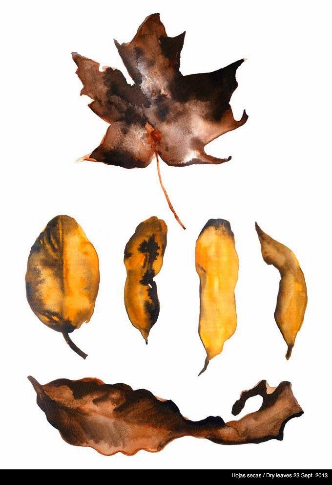 Hojas secas / Dry leaves