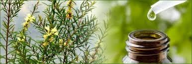 perawatan kulit natural alami jerawat sabun natural