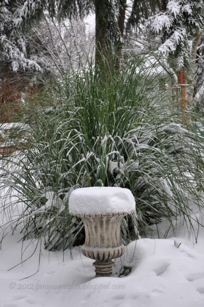 mysecretgarden my snowy winter garden zone 7b. Black Bedroom Furniture Sets. Home Design Ideas