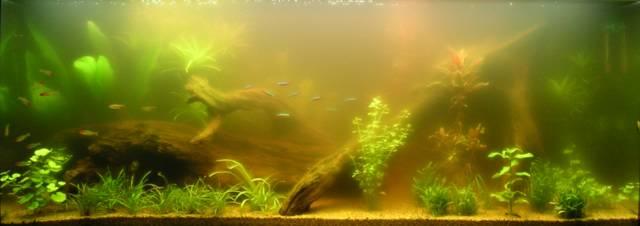 la vie de mon aquarium les algues