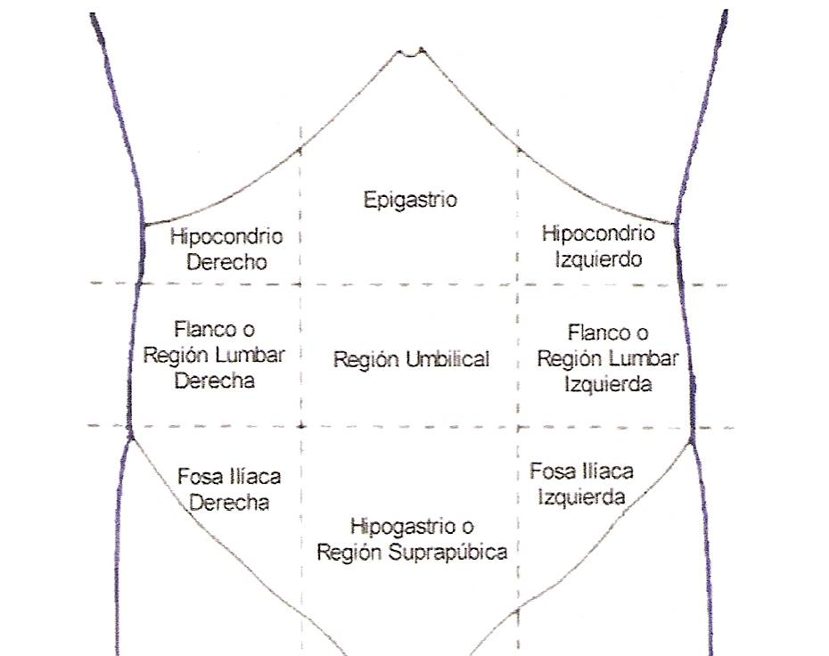 Facultad de Medicina: Regiones anatómicas- abdominales