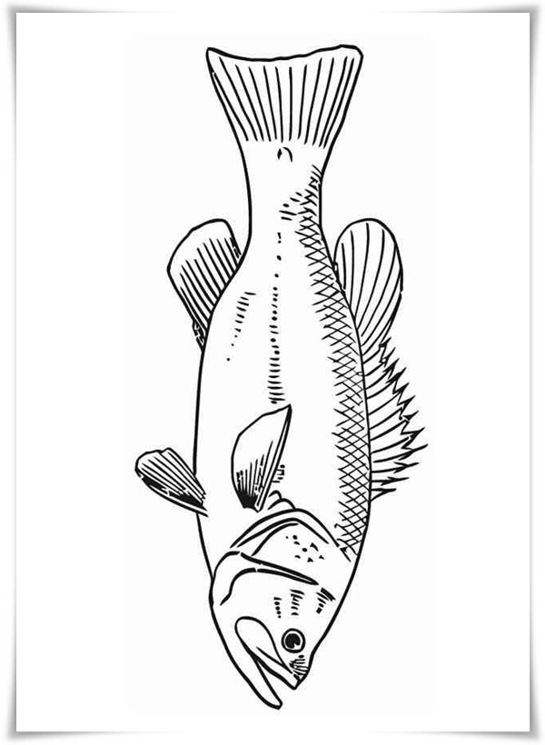 ausmalbilder zum ausdrucken ausmalbilder fische