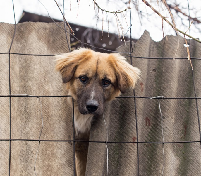 An abandoned dog looks through a wire fence