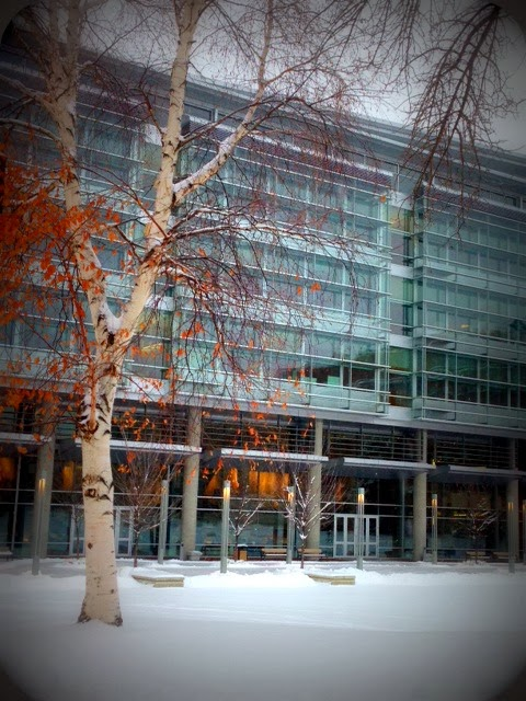 CCIS in the Winter @ UAlberta