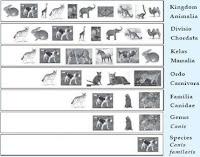 pengertian Klasifikasi sistem alam