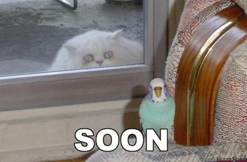 Hola, holita forerillos Soon-cat-parrot