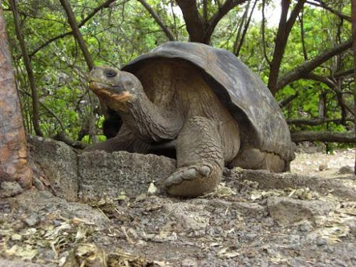 Estudando o passado distante das Ilhas Galápagos