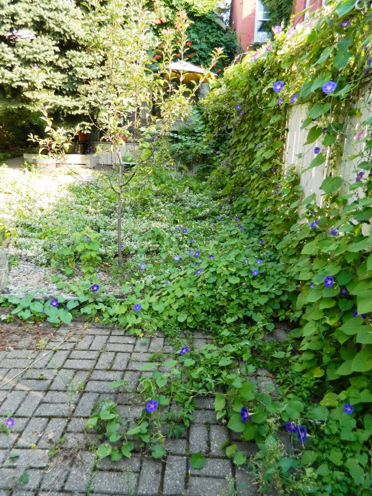 Toronto garden cleanup Cabbagetown backyard before Paul Jung Gardening Services