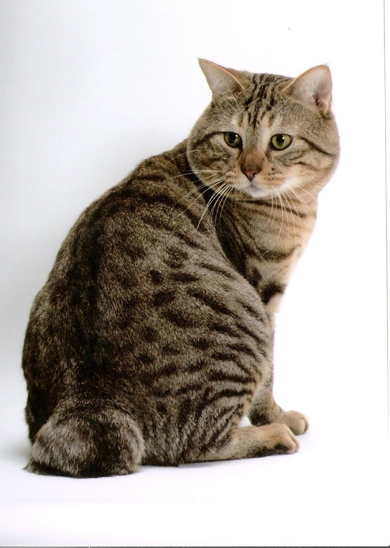 Can You Have A Devoeed Cat