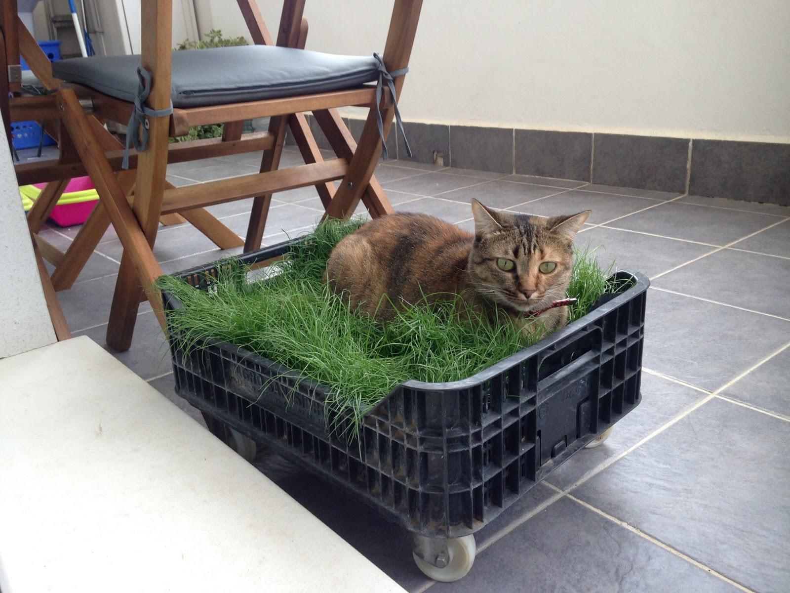 Crea tu jard n una cama para mi gato for Ahuyentar gatos de mi jardin