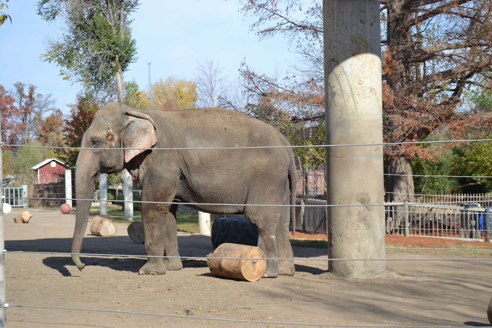 My Adventures In Wanderland Topeka Zoo And Gage Park