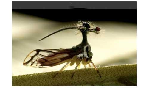 Mini Monstres - Les Membracides  Membracide2