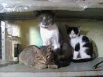 Amo esses gatos