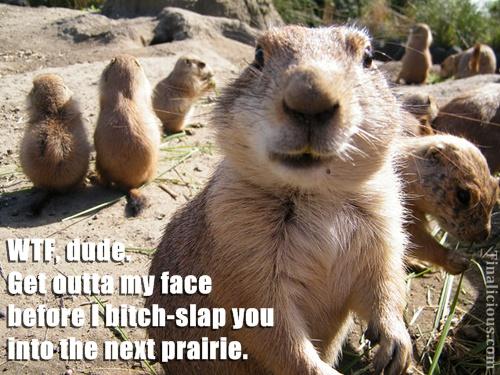 Prairie Dog Meme