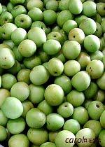 梅子季節( plum )
