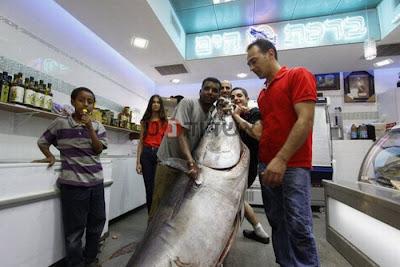 Huge Tuna Seen On www.coolpicturegallery.us