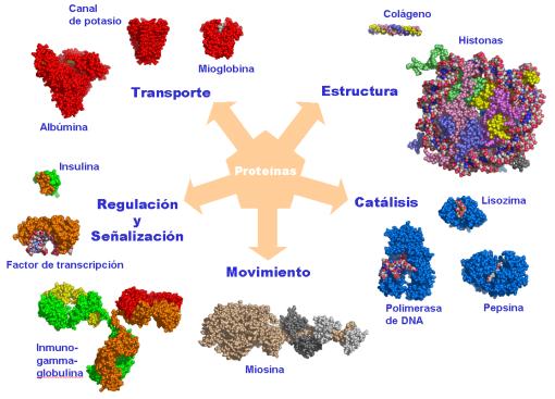 estan formado proteina: