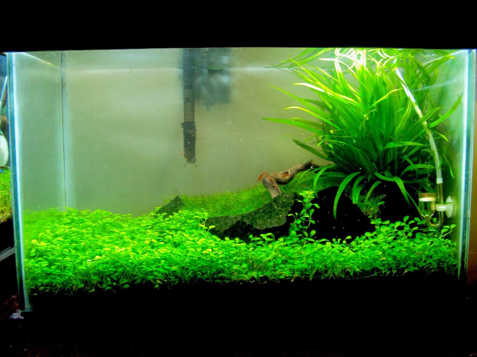 Jdb plantando un acuario paso a iii