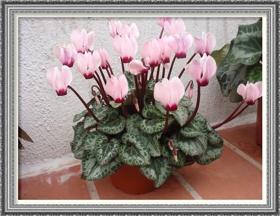 Florister a mis detalles plantas de invierno - Plantas de invierno ...
