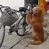 Το ποδήλατο μας (βίντεο)...