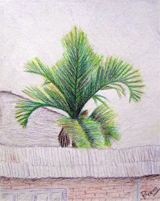 Colored Pencil Drawing of Palm Tree