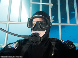 horizontal underwate digital photo of diver in shark cage