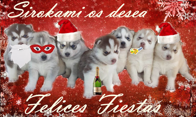 christmas sirokami