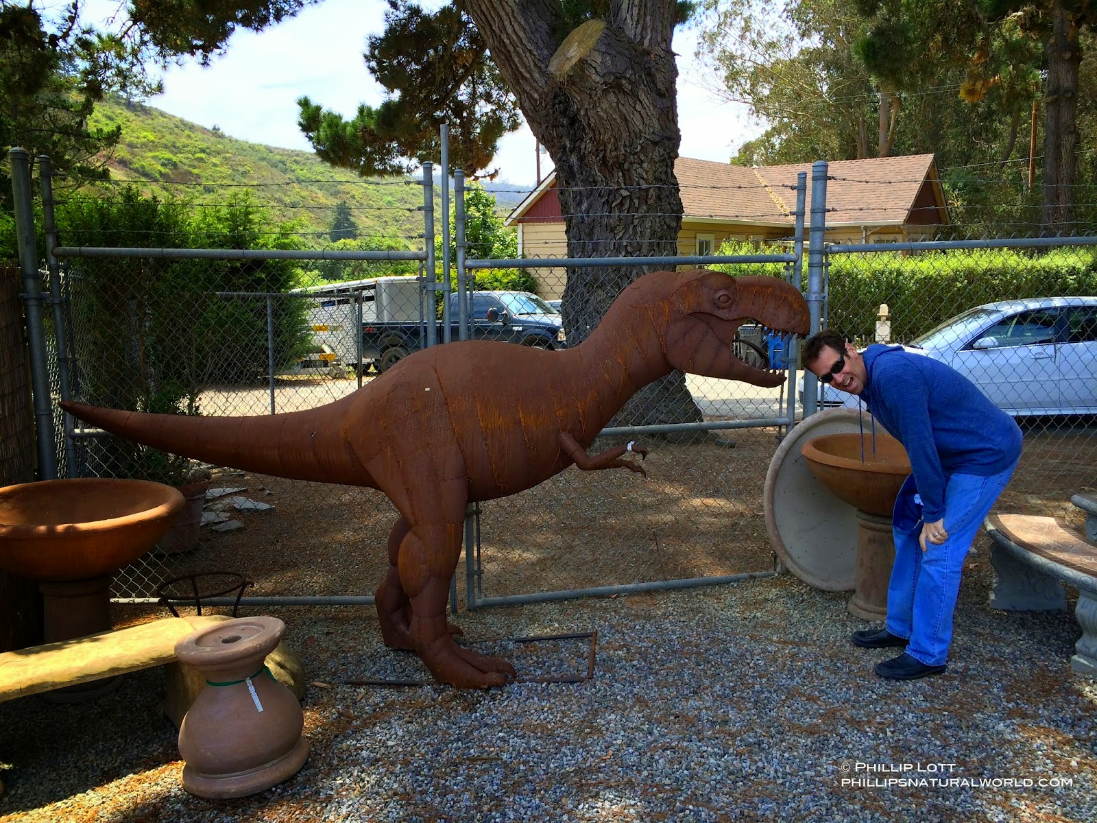i have got to get one of these tyrannosaurus rex dinosaurs for my garden i havent figured out how to transport it from california to florida yet