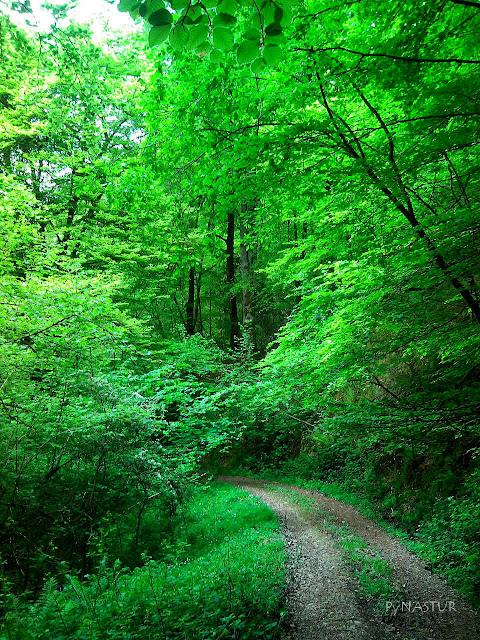 Bosque de Cea - Parres