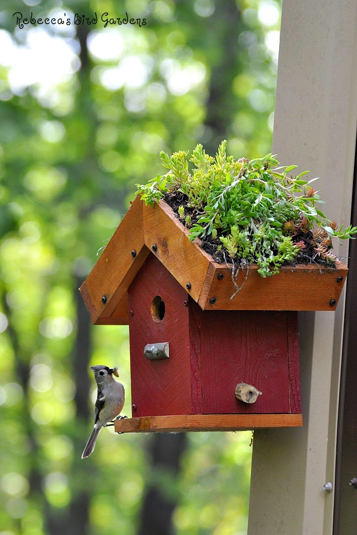 Rebecca S Bird Gardens Blog Diy Living Roof Birdhouse
