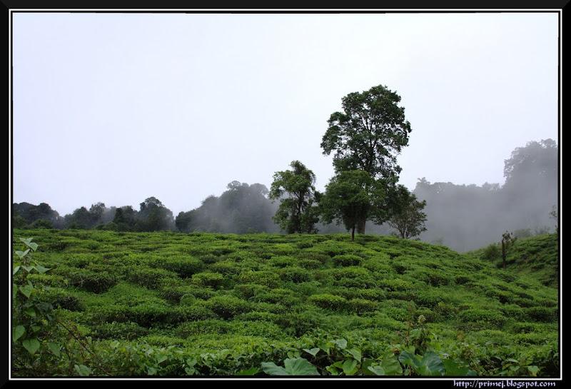 Hills, Wayanad