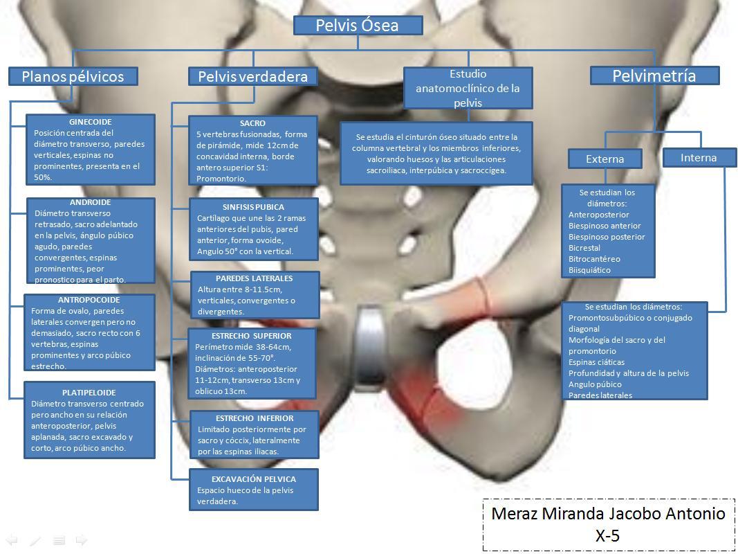 Ginecología y Obstetricia: Pelvis osea y cefalopelvimetria