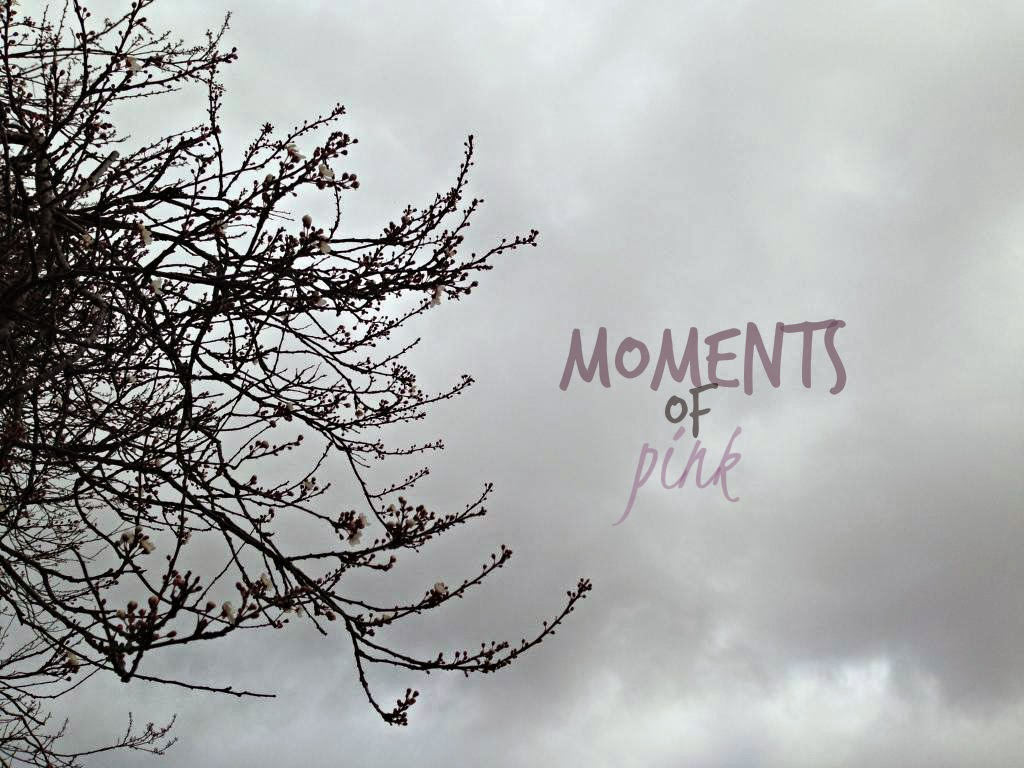 Moments of Pink