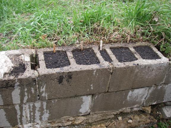 Two green boots we 39 ve gone to seed Cinder block retaining wall