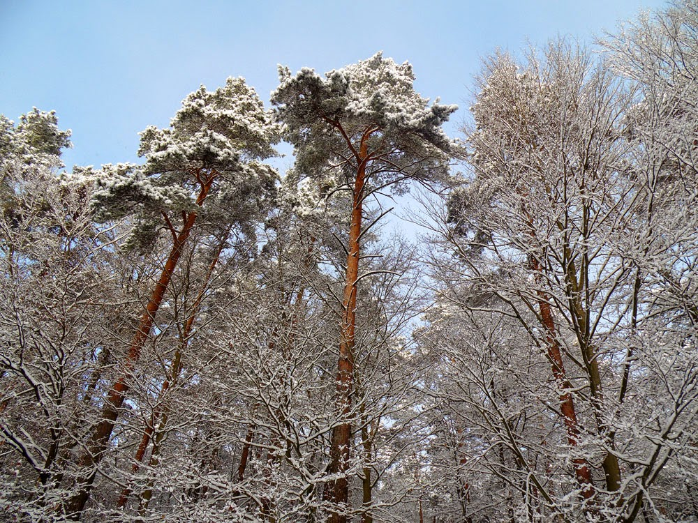 photos in the woods around Basdorf, Germany, in Winter 2014 by Andie Gilmour