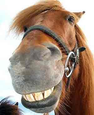 scandalul carnii de cal