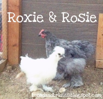 Roxie & Rosie, silkie and cochin