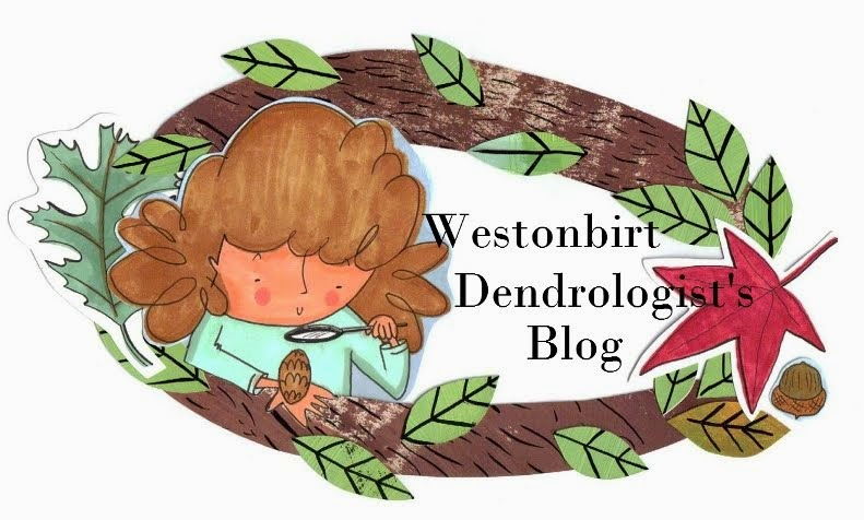 Dendrologist's Blog
