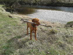 I LIKE STICKS